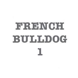 FRENCH BULLDOG 1